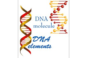 DNA molecule and elements