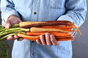 Farmer Holding Organic Carrots