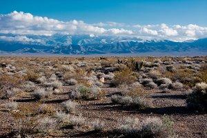 Desert Landscape (RAW + JPG)
