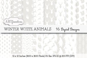Winter White Animals Backgrounds