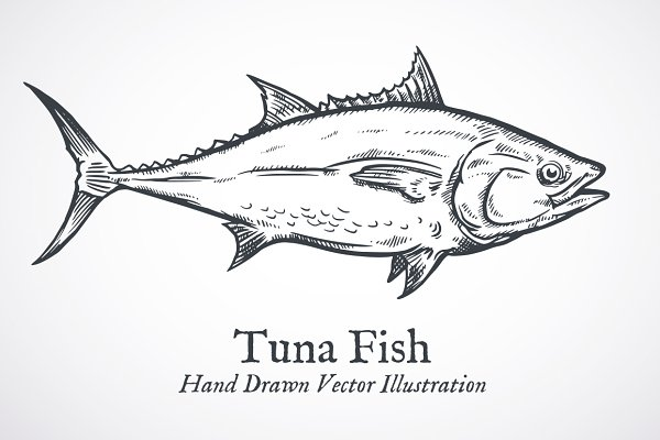 tuna fish engraving vector pre designed illustrator graphics creative market tuna fish engraving vector