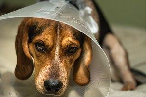 Sorry puppy (RAW + JPG)