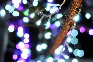 Christmas lights bokeh on pine tree