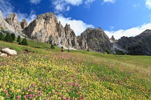 Dolomiti - flowered meadow