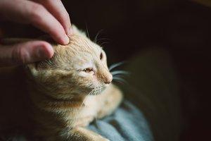 Human hand caressing a kitten