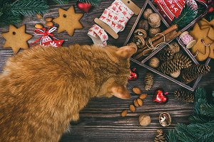 Christmas decoration with ginger cat hanging over the wooden background