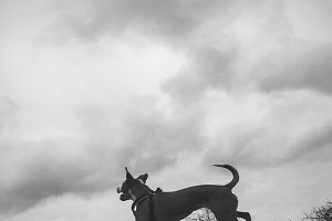 Black and White Dog Jumping