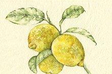 Lemon in watercolor