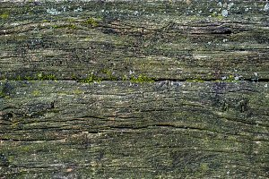 Old mossy wooden texture