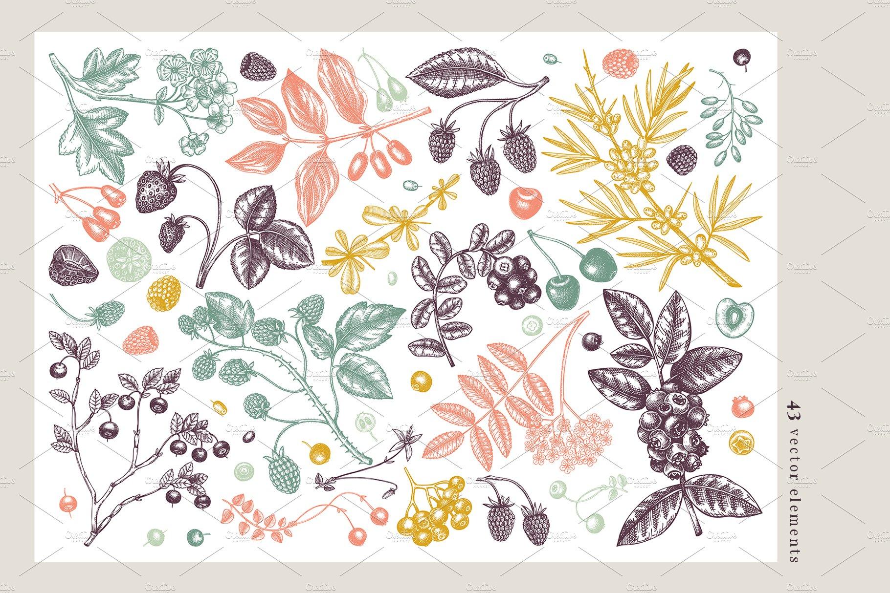 hand drawn berries vectors and designs 01 3