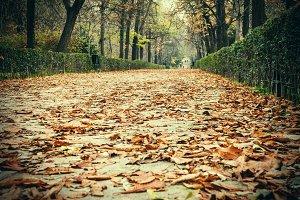 Parque del Retiro, Madrid.