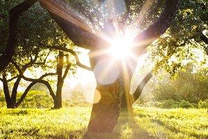 Sun shines through tree crowns