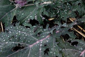 Leafy Greens 3