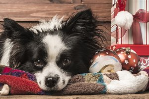 Dogs Christmas greeting templates
