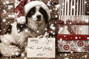 Pets  Christmas wishing postcard
