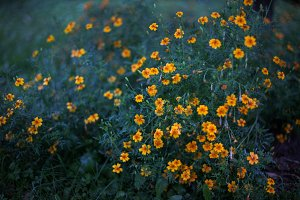 yellow flowers in the evening