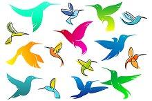 Colorful hummingbird birds