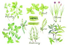 Watercolor Clipart Herb Collection