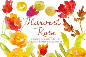 Watercolor Floral Elements - Rose