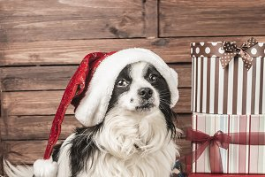 Dogs Christmas greeting card