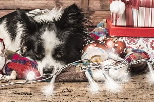 Dog, Christmas postcard