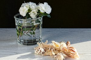 Sea shells and white flowers