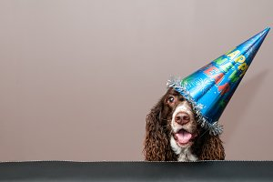 Happy Dog in a New Year Party Hat