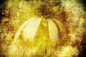 Flower on grunge background