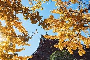 Tokyo City - Sensoji-ji Temple