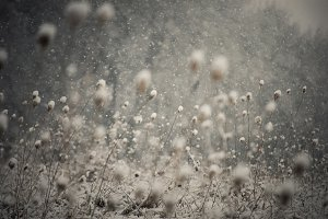 Snow flakes over winter landscape