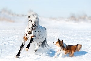 Pony and dog have fun in snow