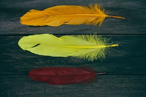 colored feathers on the wooden table