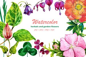 Watercolor herbals and flowers