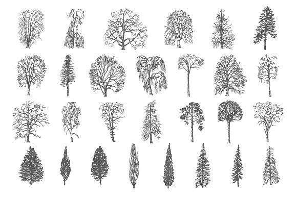 28 Ink trees vector set in Illustrations