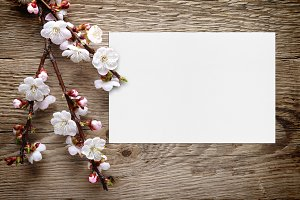 Apricot blossom and greeting card