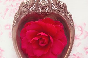 Silver heart - red camellia