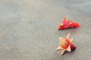 Fallen pomegranate blossoms
