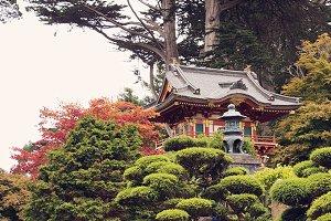 In the tea garden