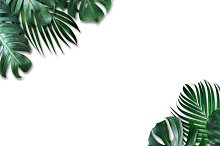 Tropical leaves on white background containing abstract, art, and backdrop