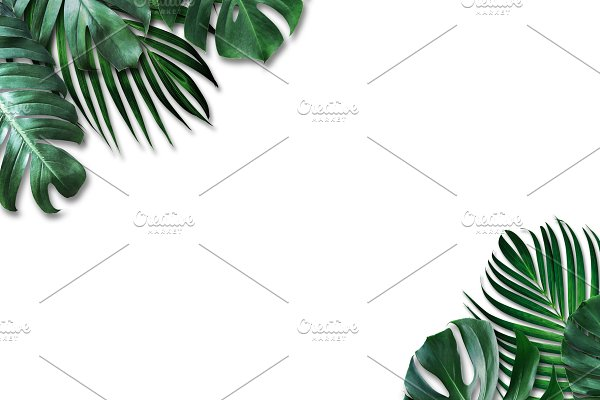 Tropical Leaves On White Background High Quality Nature Stock Photos Creative Market Download a free preview or high quality adobe illustrator ai, eps, pdf and high resolution jpeg versions. tropical leaves on white background