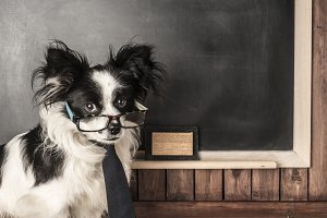 Dog as a school teacher with glasses