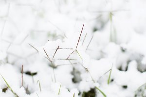 snow on grass.