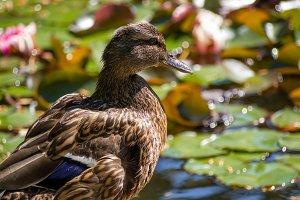 In sunny pond