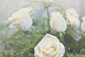 White roses (portrait)
