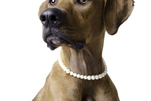 Dog with Pearl Necklace