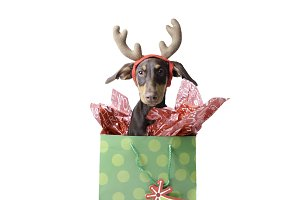 Dog in Holiday Gift Bag