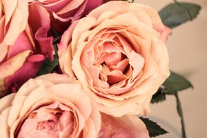 Floral Stock Photo | Peachy Roses