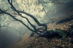 Mysterious autumn old forest in fog