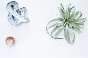 Air Plant and Ampersand Minimal Desk