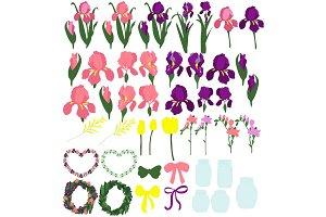 Set of irises, the individual parts